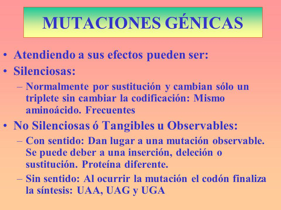 MUTACIONES GÉNICAS Atendiendo a sus efectos pueden ser: Silenciosas: