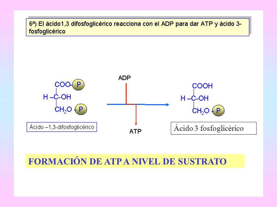 FORMACIÓN DE ATP A NIVEL DE SUSTRATO