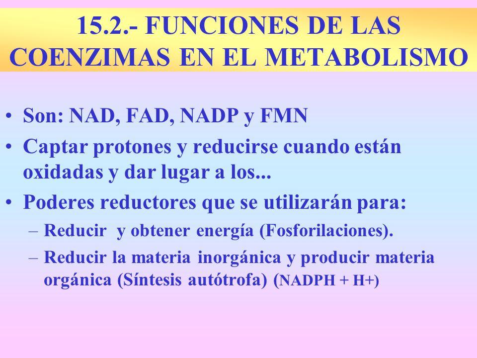 15.2.- FUNCIONES DE LAS COENZIMAS EN EL METABOLISMO