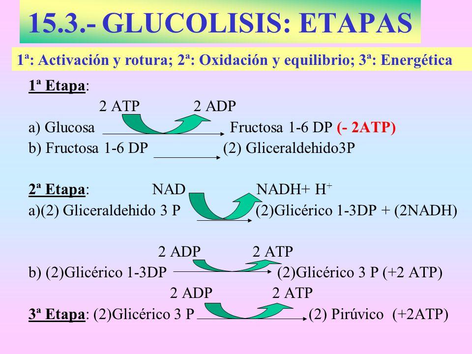 15.3.- GLUCOLISIS: ETAPAS 1ª: Activación y rotura; 2ª: Oxidación y equilibrio; 3ª: Energética. 1ª Etapa: