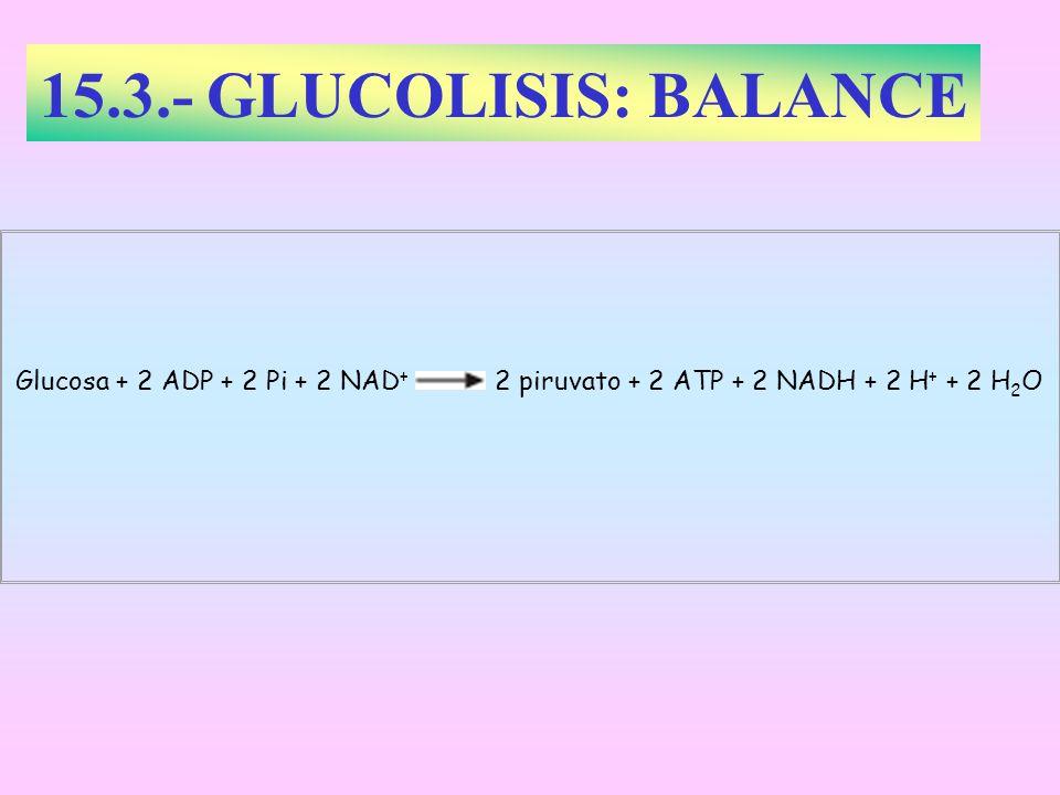 15.3.- GLUCOLISIS: BALANCE Glucosa + 2 ADP + 2 Pi + 2 NAD+ 2 piruvato + 2 ATP + 2 NADH + 2 H+ + 2 H2O.