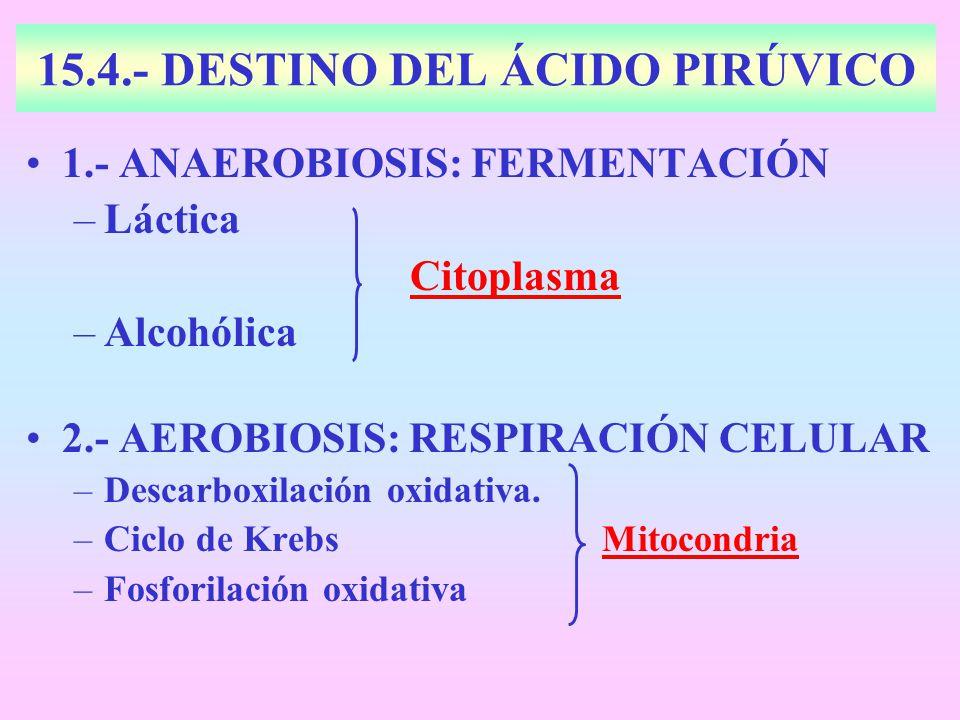 15.4.- DESTINO DEL ÁCIDO PIRÚVICO