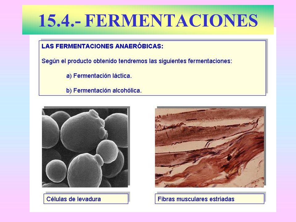 15.4.- FERMENTACIONES