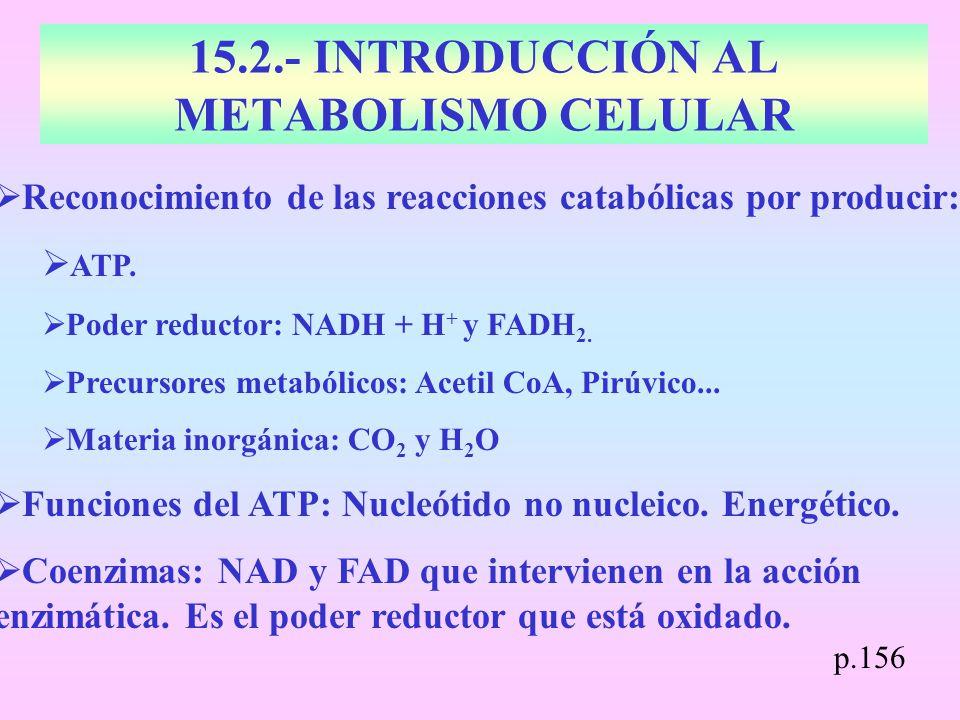 15.2.- INTRODUCCIÓN AL METABOLISMO CELULAR