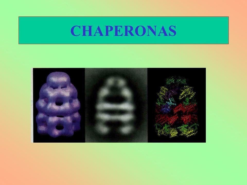 CHAPERONAS