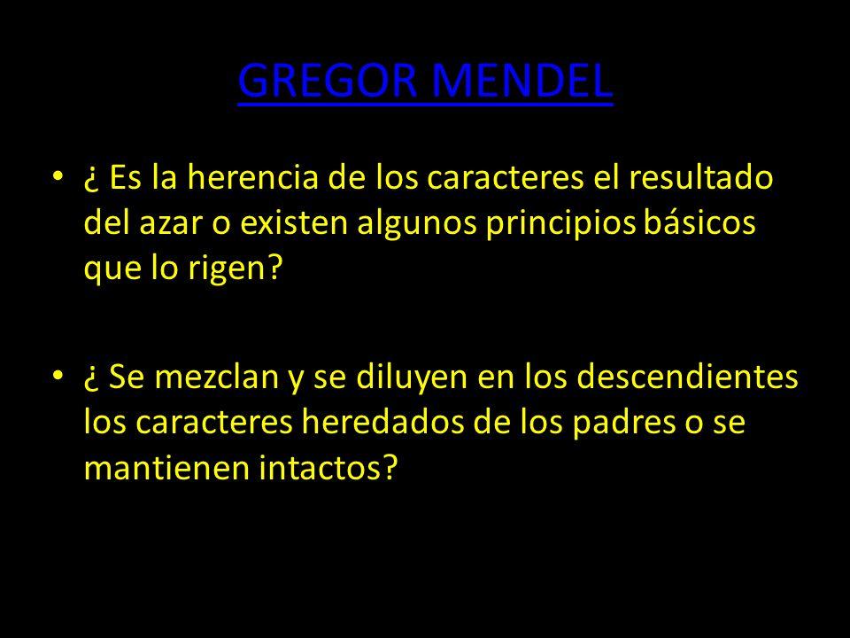 GREGOR MENDEL ¿ Es la herencia de los caracteres el resultado del azar o existen algunos principios básicos que lo rigen