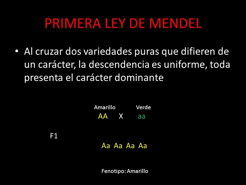 PRIMERA LEY DE MENDEL Al cruzar dos variedades puras que difieren de un carácter, la descendencia es uniforme, toda presenta el carácter dominante.