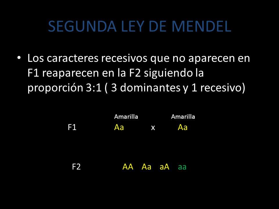 SEGUNDA LEY DE MENDEL Los caracteres recesivos que no aparecen en F1 reaparecen en la F2 siguiendo la proporción 3:1 ( 3 dominantes y 1 recesivo)