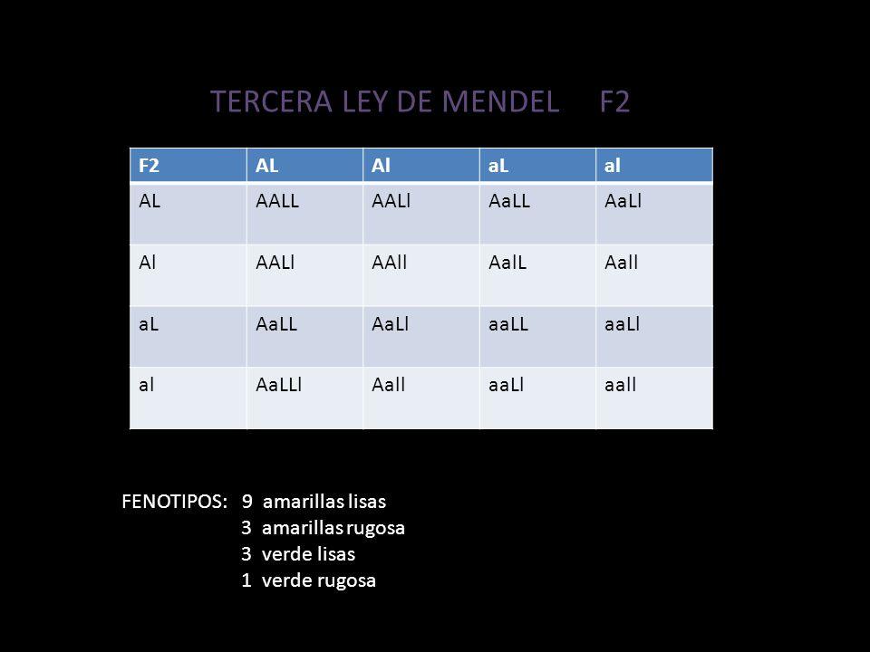 TERCERA LEY DE MENDEL F2 F2 AL Al aL al AALL AALl AaLL AaLl AAll AalL