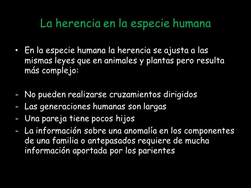 La herencia en la especie humana