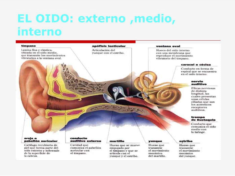 EL OIDO: externo ,medio, interno
