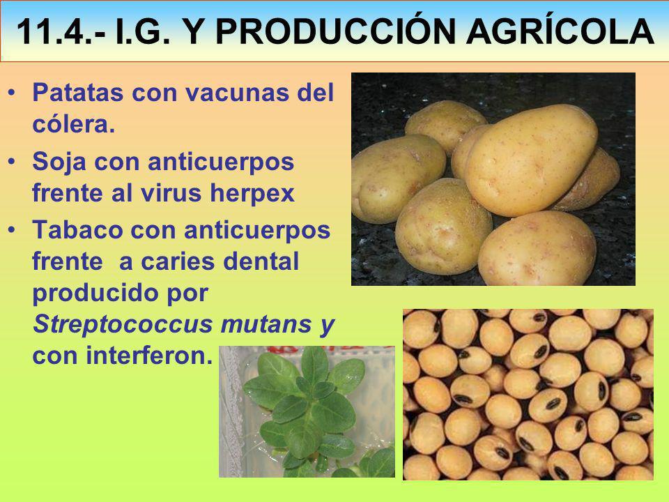 11.4.- I.G. Y PRODUCCIÓN AGRÍCOLA