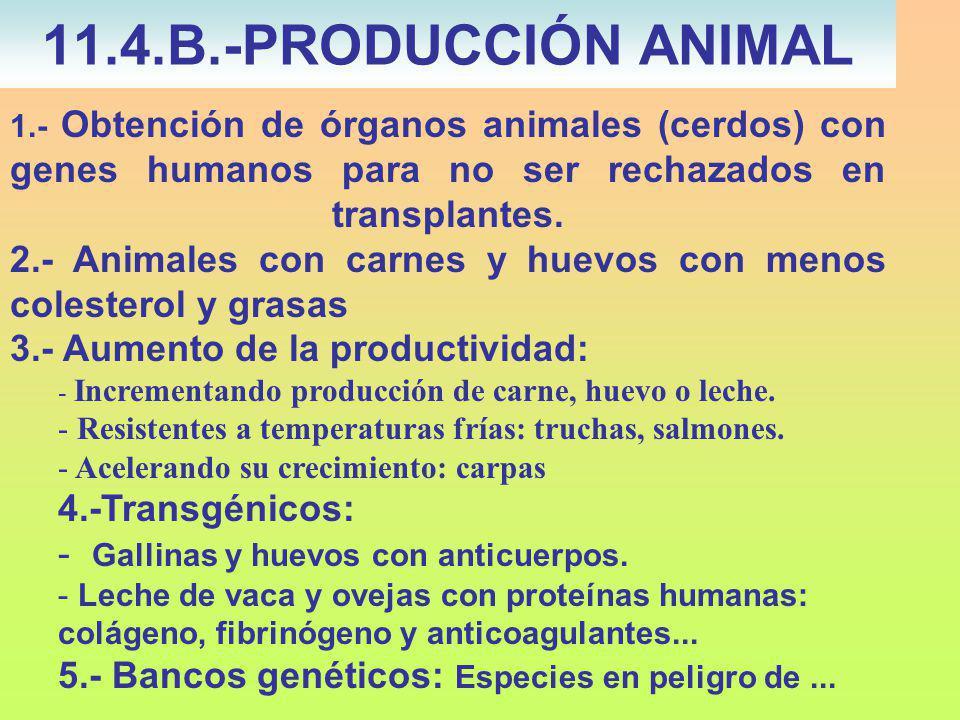 11.4.B.-PRODUCCIÓN ANIMAL 3.- Aumento de la productividad: