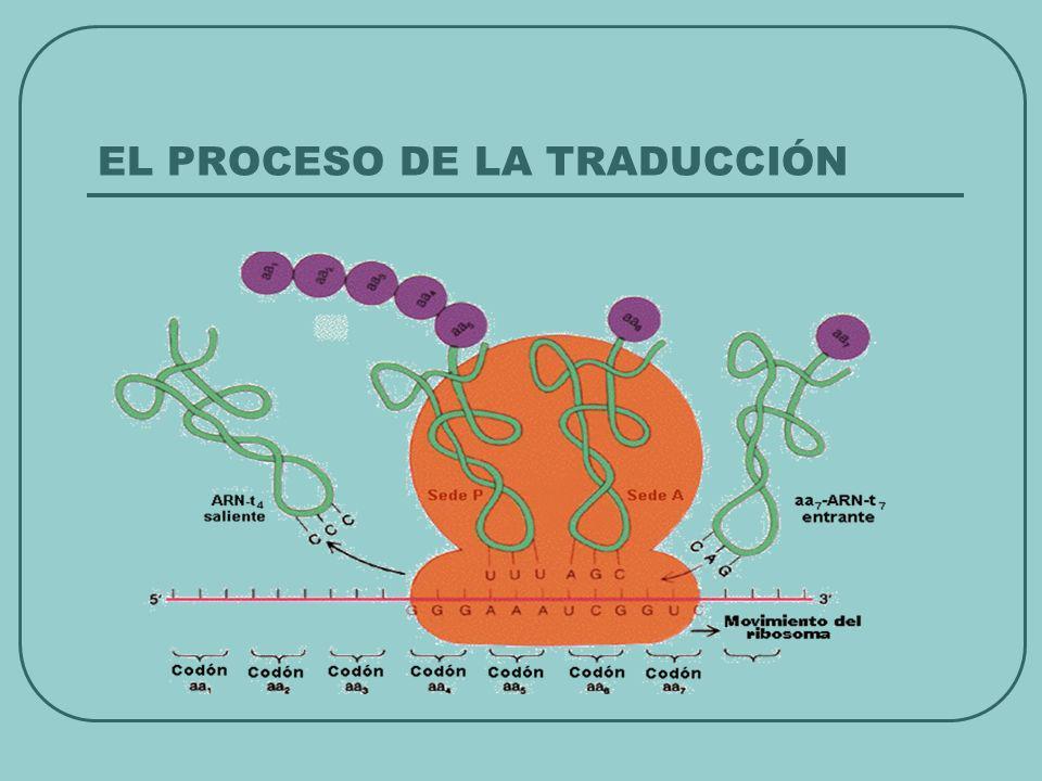 EL PROCESO DE LA TRADUCCIÓN
