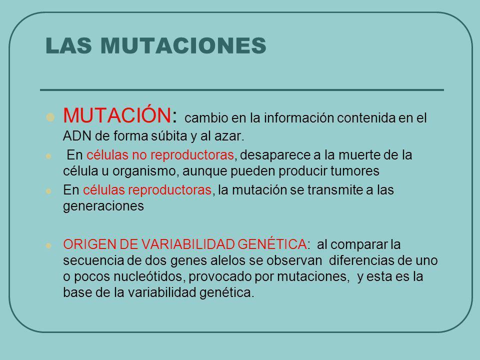 LAS MUTACIONES MUTACIÓN: cambio en la información contenida en el ADN de forma súbita y al azar.