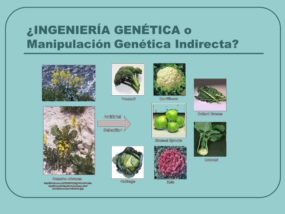 ¿INGENIERÍA GENÉTICA o Manipulación Genética Indirecta