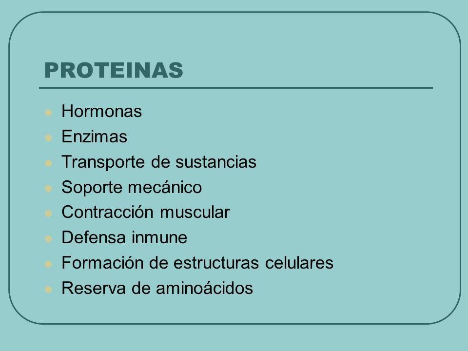 PROTEINAS Hormonas Enzimas Transporte de sustancias Soporte mecánico