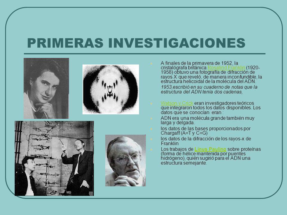 PRIMERAS INVESTIGACIONES