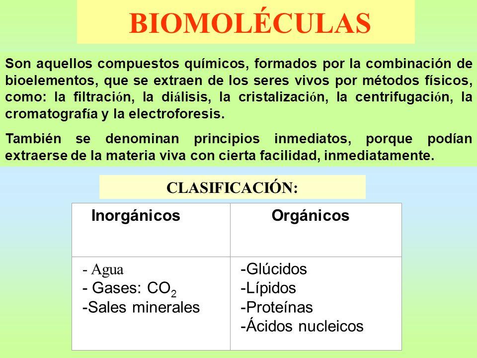 BIOMOLÉCULAS CLASIFICACIÓN: - Agua - Gases: CO2 -Sales minerales