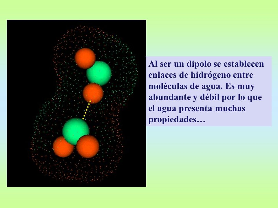Al ser un dipolo se establecen enlaces de hidrógeno entre moléculas de agua.