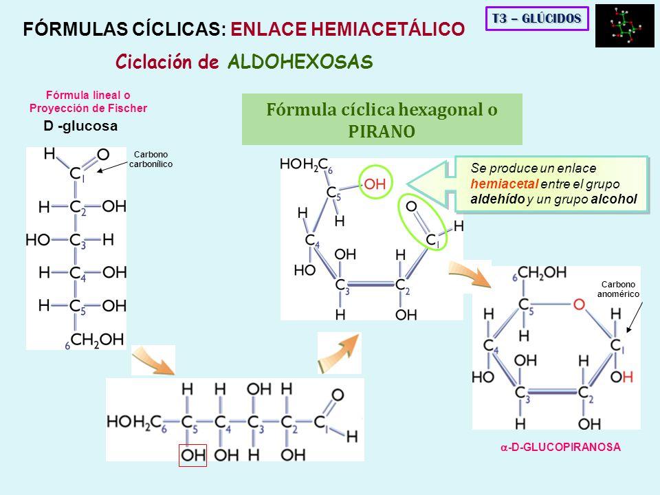 FÓRMULAS CÍCLICAS: ENLACE HEMIACETÁLICO Ciclación de ALDOHEXOSAS