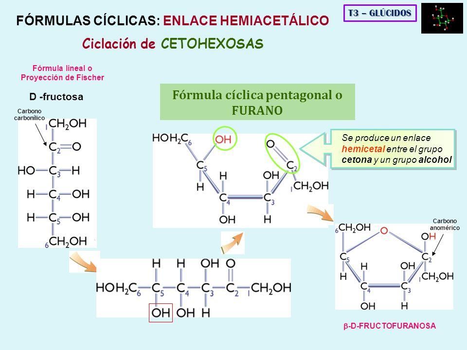 FÓRMULAS CÍCLICAS: ENLACE HEMIACETÁLICO Ciclación de CETOHEXOSAS