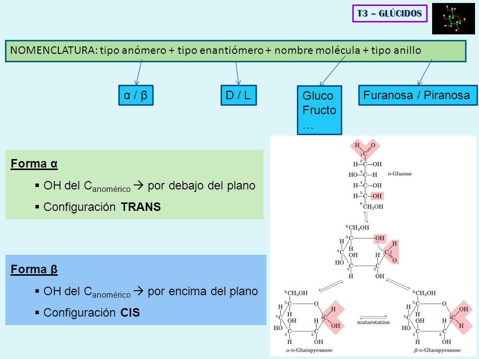 OH del Canomérico  por debajo del plano Configuración TRANS