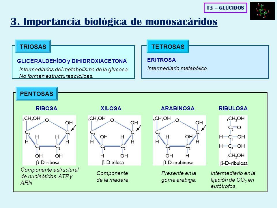 3. Importancia biológica de monosacáridos