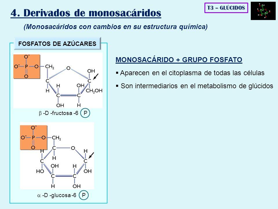 4. Derivados de monosacáridos