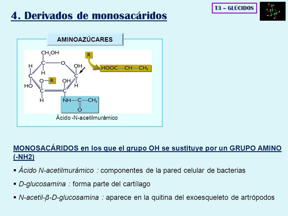 Ácido -N-acetilmurámico
