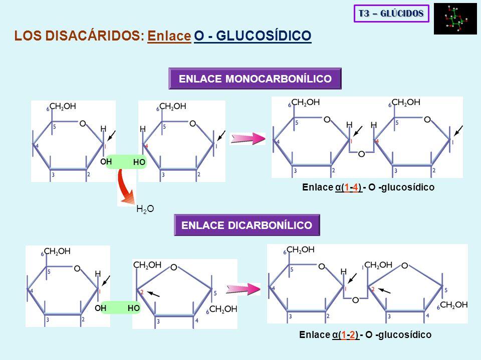 LOS DISACÁRIDOS: Enlace O - GLUCOSÍDICO