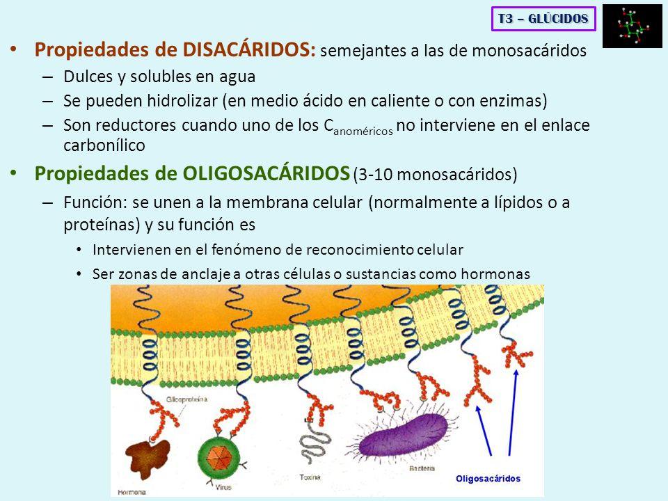 Propiedades de DISACÁRIDOS: semejantes a las de monosacáridos