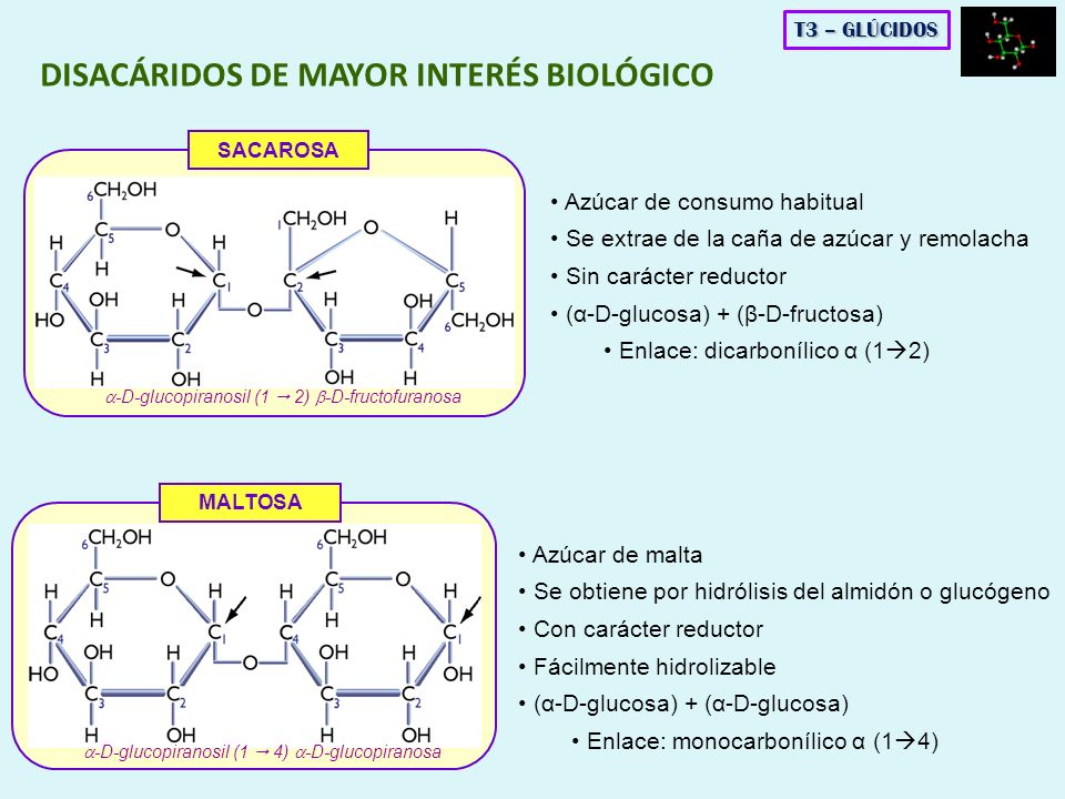 DISACÁRIDOS DE MAYOR INTERÉS BIOLÓGICO