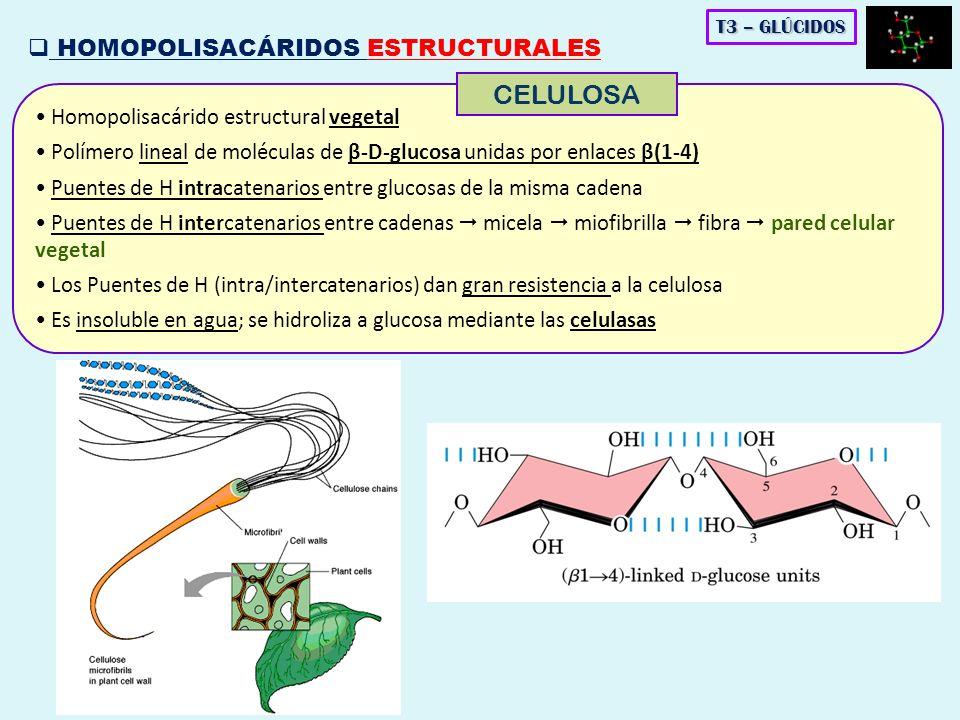 CELULOSA HOMOPOLISACÁRIDOS ESTRUCTURALES