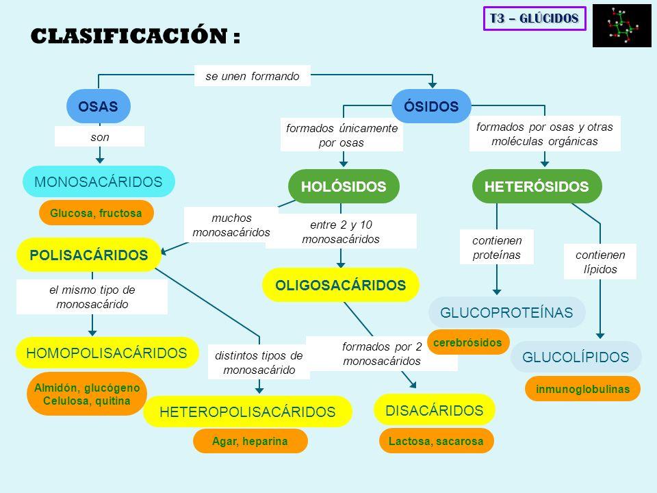 CLASIFICACIÓN : OSAS ÓSIDOS MONOSACÁRIDOS HOLÓSIDOS HETERÓSIDOS