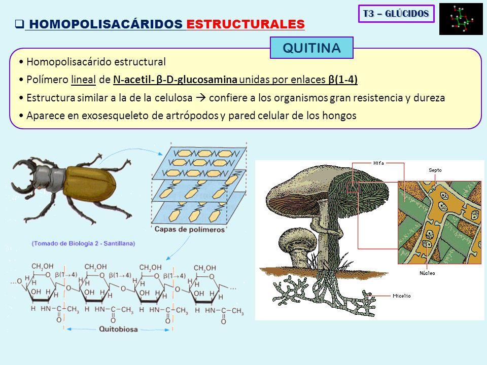 QUITINA HOMOPOLISACÁRIDOS ESTRUCTURALES Homopolisacárido estructural