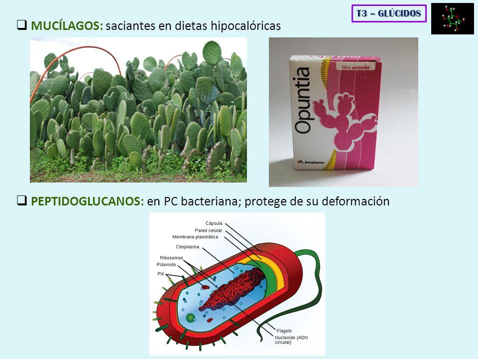MUCÍLAGOS: saciantes en dietas hipocalóricas