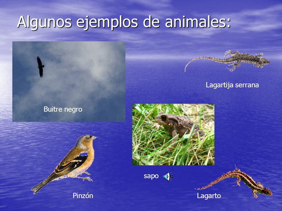 Algunos ejemplos de animales: