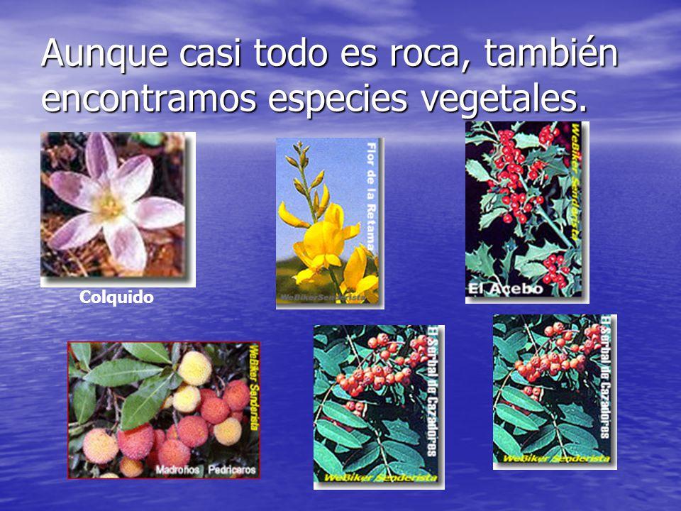 Aunque casi todo es roca, también encontramos especies vegetales.