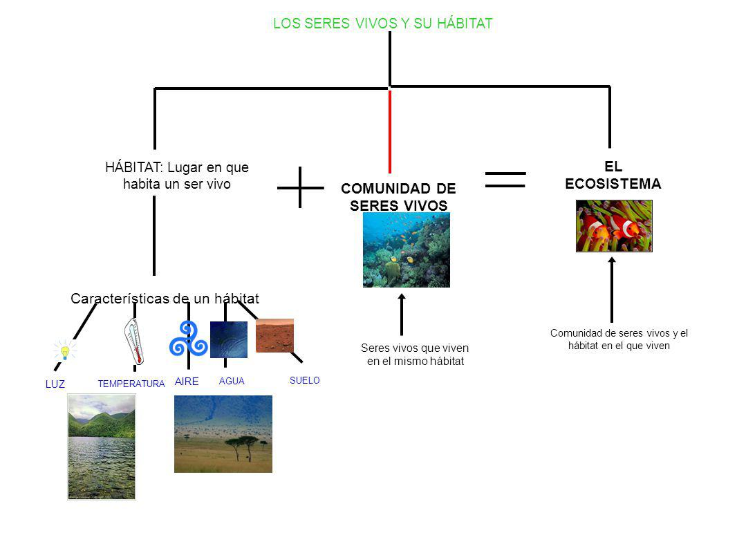 COMUNIDAD DE SERES VIVOS
