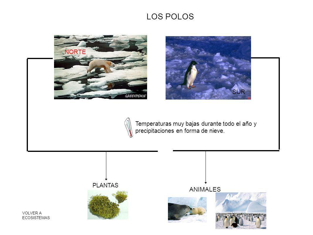 LOS POLOS NORTE SUR ANIMALES