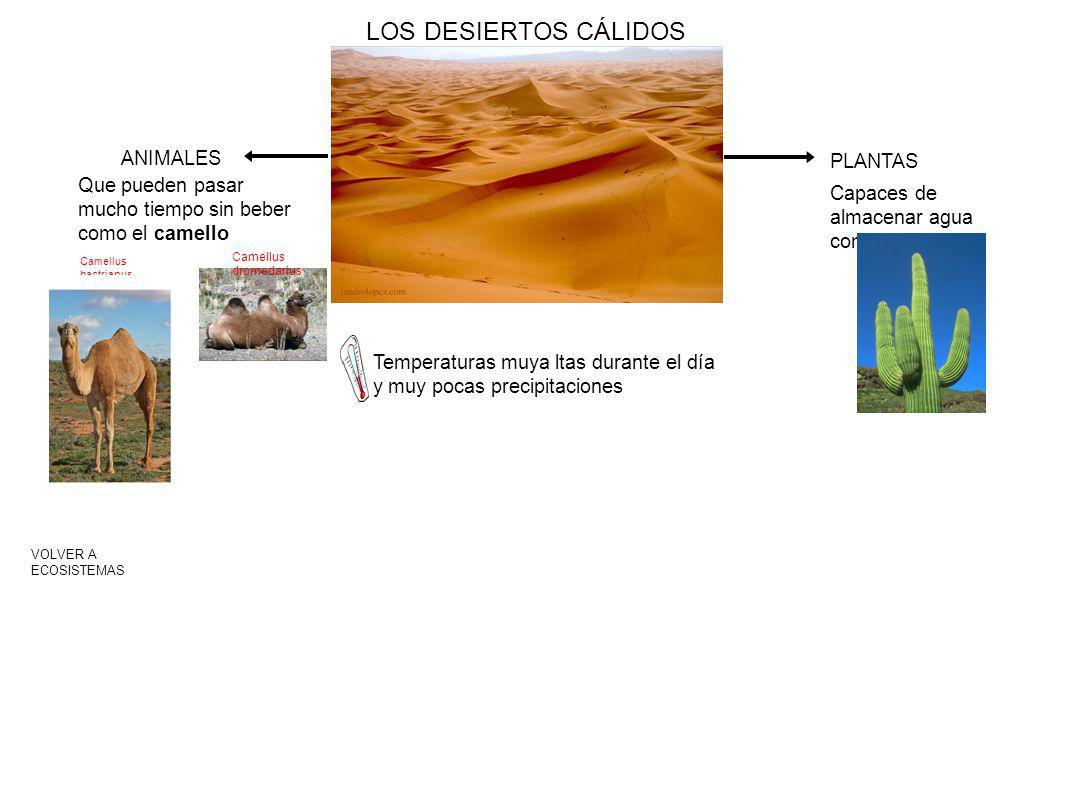 LOS DESIERTOS CÁLIDOS ANIMALES PLANTAS