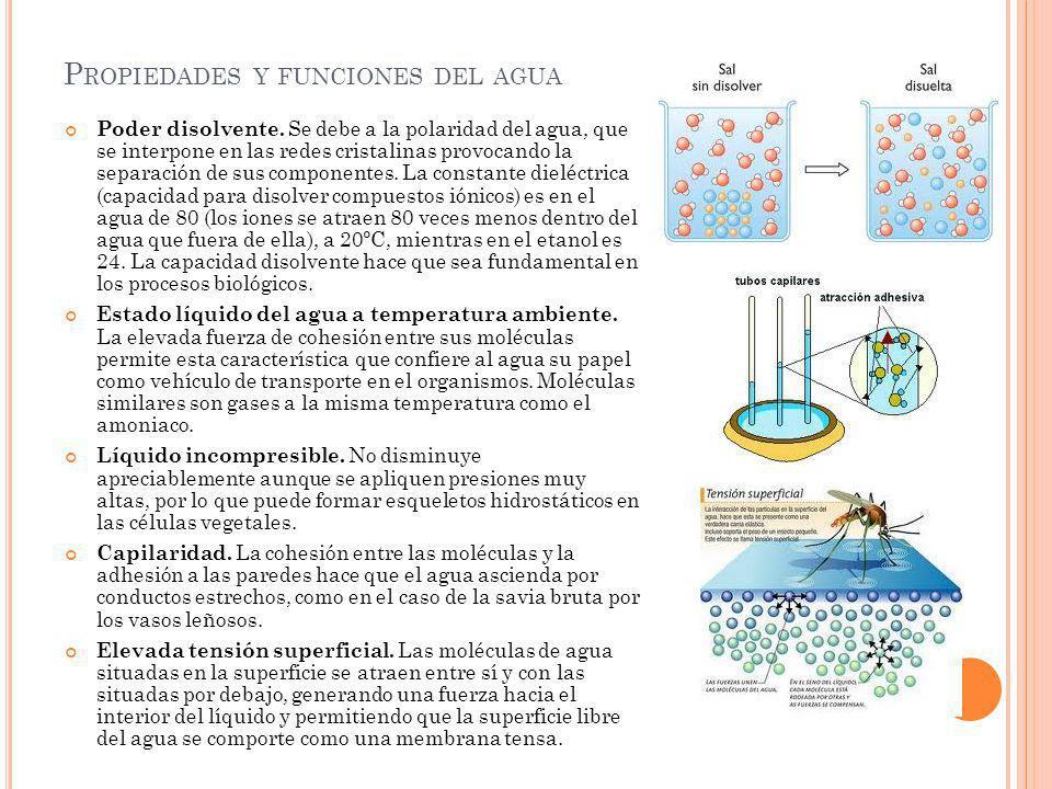Propiedades y funciones del agua
