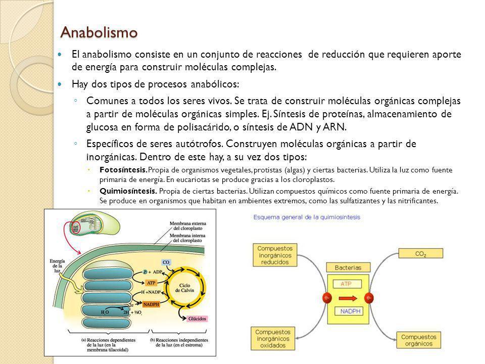 Anabolismo El anabolismo consiste en un conjunto de reacciones de reducción que requieren aporte de energía para construir moléculas complejas.