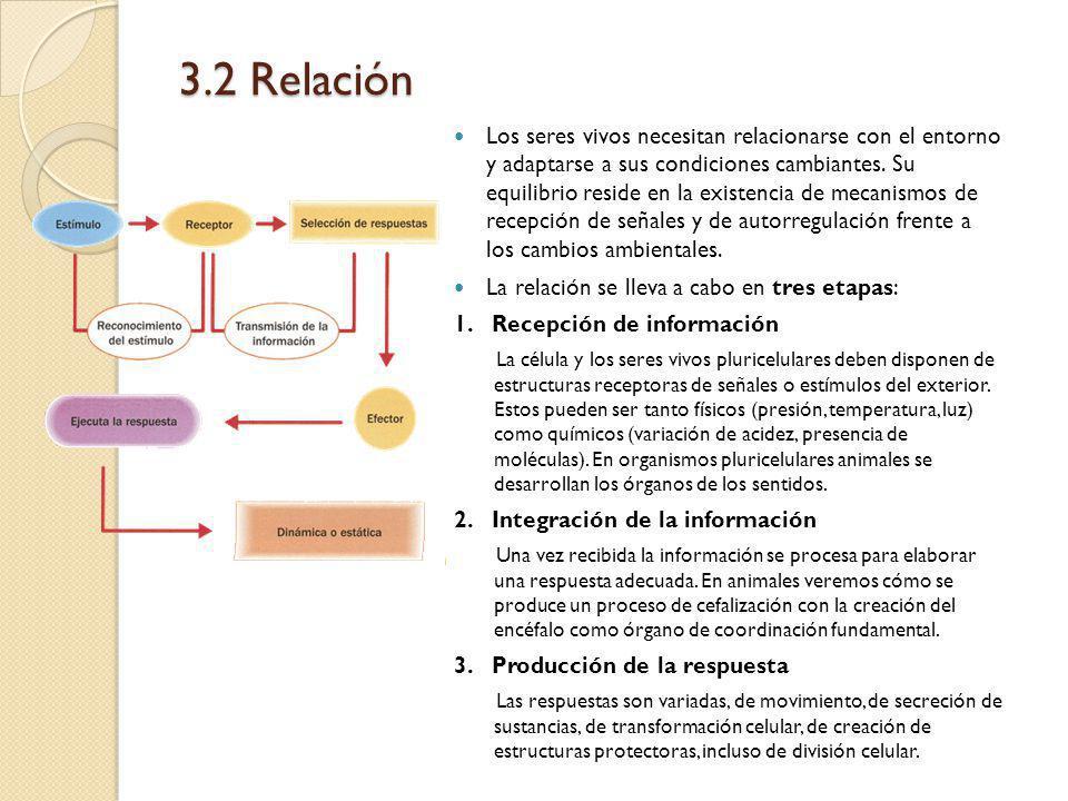 3.2 Relación