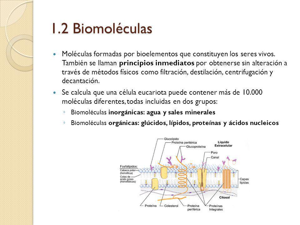 1.2 Biomoléculas