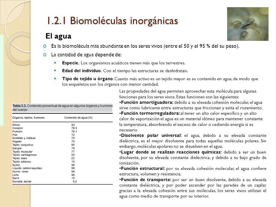 1.2.1 Biomoléculas inorgánicas