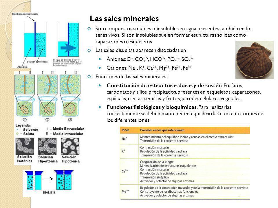 Las sales minerales