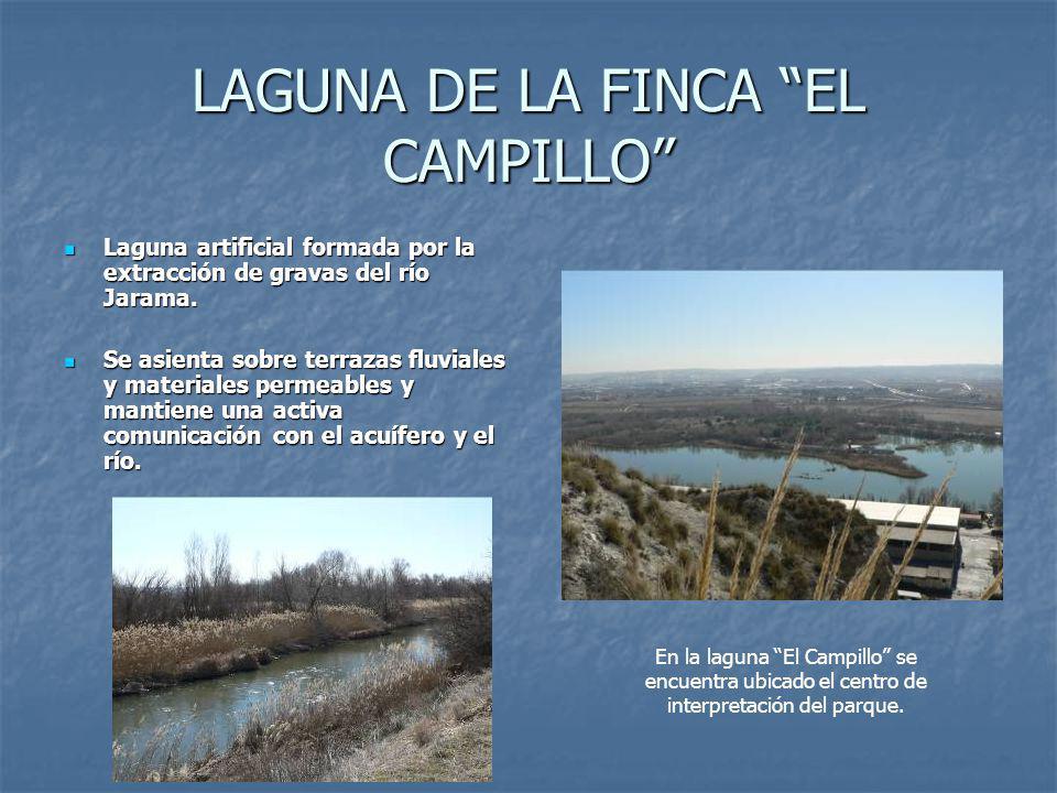 LAGUNA DE LA FINCA EL CAMPILLO