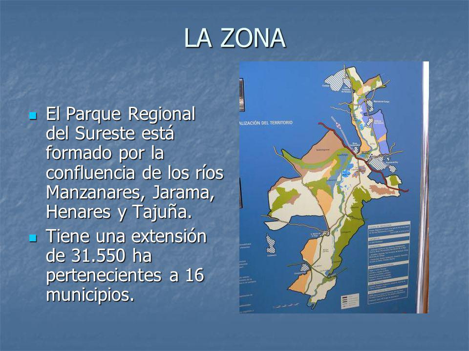 LA ZONA El Parque Regional del Sureste está formado por la confluencia de los ríos Manzanares, Jarama, Henares y Tajuña.